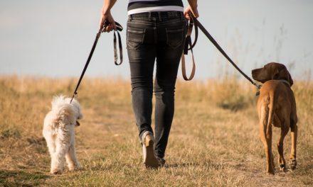 Hvor langt kan hunden din gå?